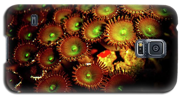 Galaxy S5 Case featuring the photograph Green Button Polyps by Anthony Jones