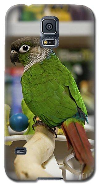 Green Cheek Conure Galaxy S5 Case