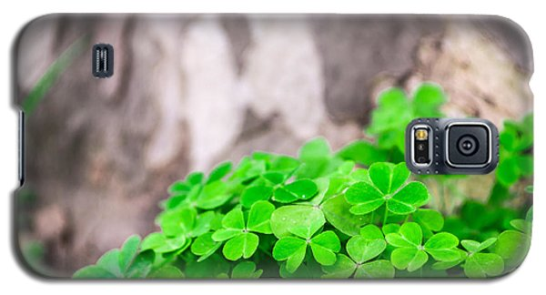 Galaxy S5 Case featuring the photograph Green Clover And Grey Tree by John Williams