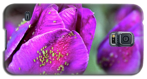 Aphids On Purple Tulips Galaxy S5 Case