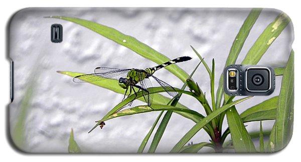 Green Dragonfly Galaxy S5 Case by Terri Mills