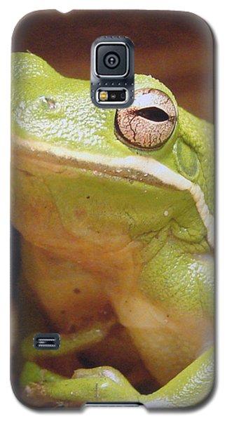 Green Frog Galaxy S5 Case by J R Seymour
