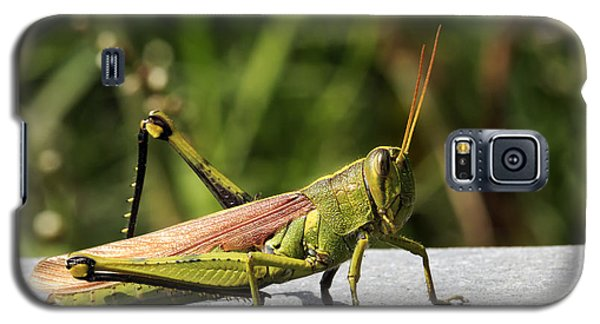 Green Grasshopper Galaxy S5 Case
