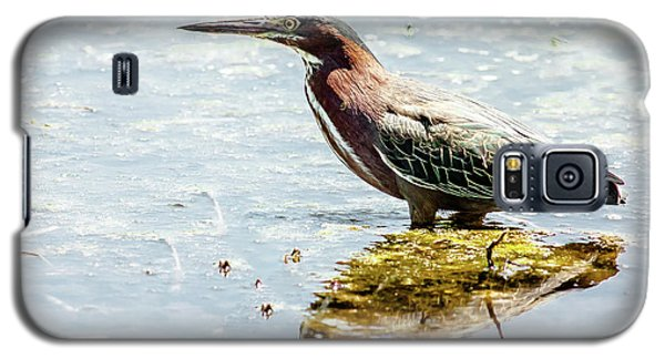 Galaxy S5 Case featuring the photograph Green Heron Bright Day by Robert Frederick