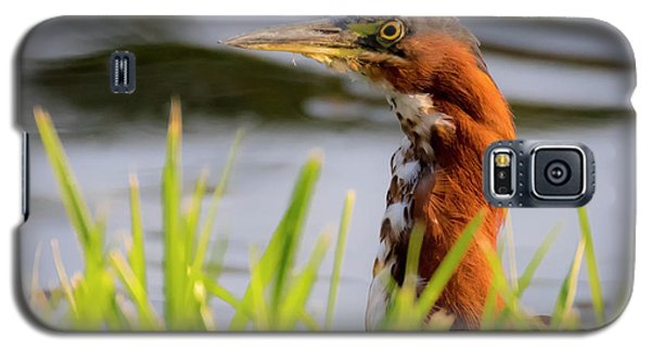 Galaxy S5 Case featuring the photograph Green Heron Closeup  by Ricky L Jones
