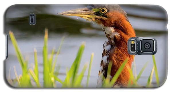 Green Heron Closeup  Galaxy S5 Case