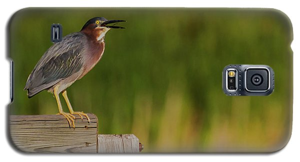 Green Heron Evening Galaxy S5 Case