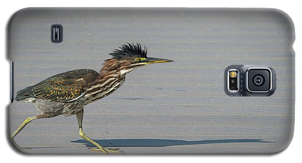 Green Heron On A Mission Galaxy S5 Case