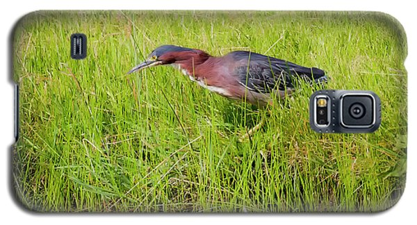 Galaxy S5 Case featuring the photograph Green Heron On The Hunt by Ricky L Jones