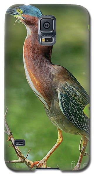Galaxy S5 Case featuring the photograph Green Heron Pose by Deborah Benoit