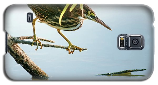 Galaxy S5 Case featuring the photograph Green Heron Sees Minnow by Robert Frederick