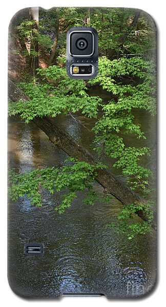 Galaxy S5 Case featuring the photograph Green Is For Spring by Skip Willits