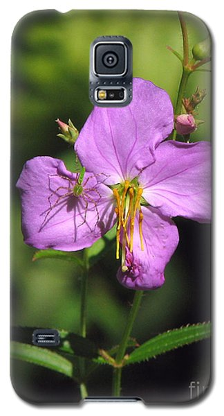 Green Lynx Spider On Meadow Beauty Galaxy S5 Case