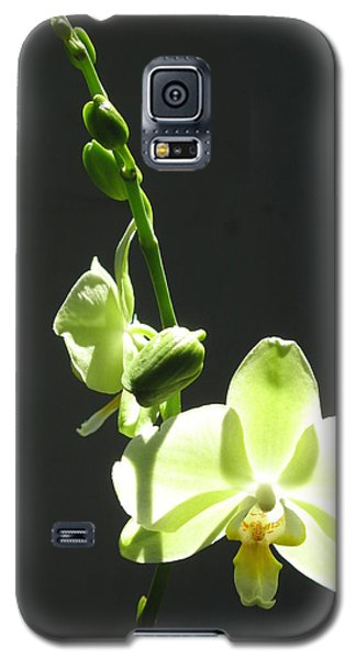 Galaxy S5 Case featuring the photograph Green Orchids by Alfred Ng