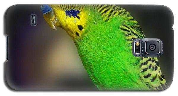 Green Parakeet Portrait Galaxy S5 Case by Jai Johnson