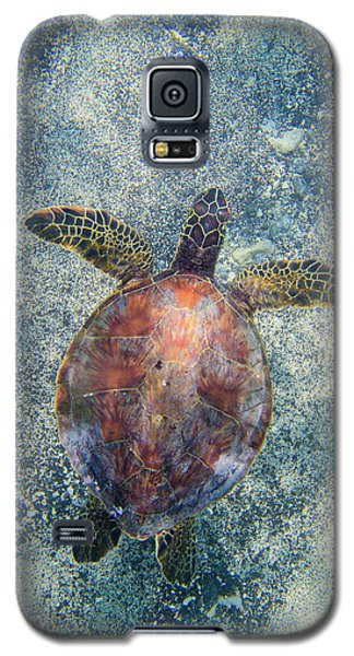Green Sea Turtle From Above Galaxy S5 Case