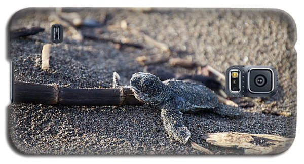 Galaxy S5 Case featuring the photograph Green Sea Turtle Hatchling by Breck Bartholomew