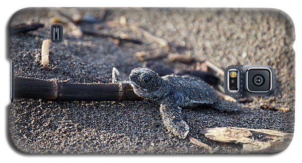 Green Sea Turtle Hatchling Galaxy S5 Case by Breck Bartholomew