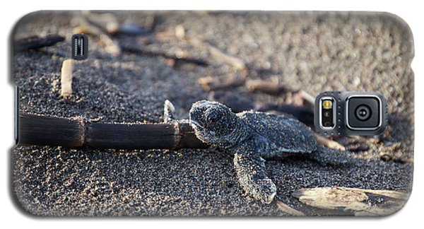 Green Sea Turtle Hatchling Galaxy S5 Case