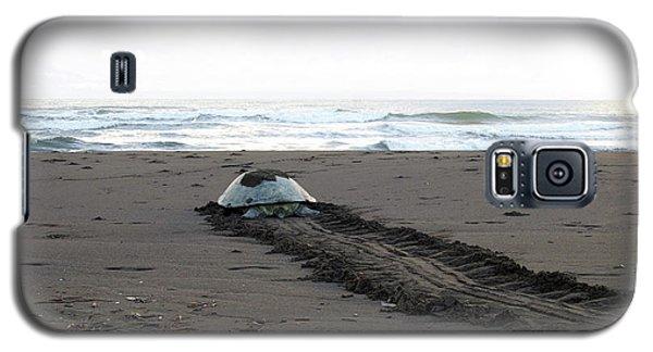 Green Sea Turtle Returning To Sea Galaxy S5 Case