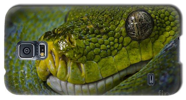 Green Snake Galaxy S5 Case