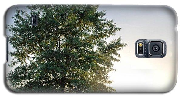 Green Tree Bright Sunshine Background Galaxy S5 Case