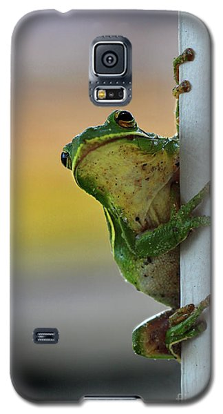 Green Tree Frog  It's Not Easy Being Green Galaxy S5 Case