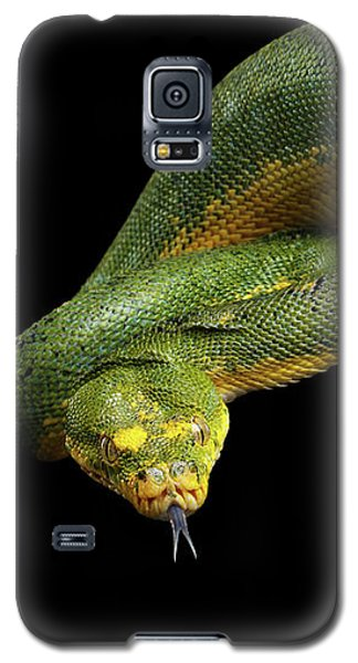Green Tree Python. Morelia Viridis. Isolated Black Background Galaxy S5 Case by Sergey Taran