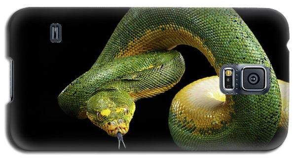 Green Tree Python. Morelia Viridis. Isolated Black Background Galaxy S5 Case