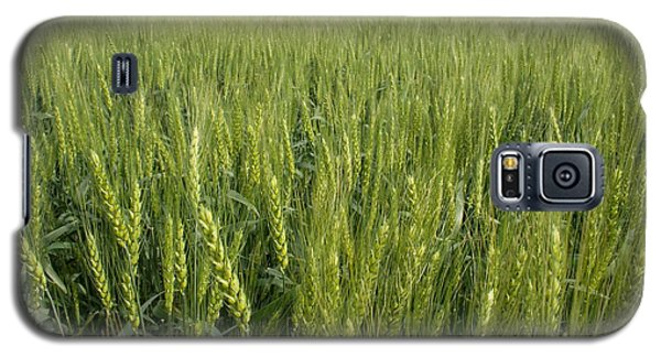 Galaxy S5 Case featuring the photograph Green Wheat by Dylan Punke