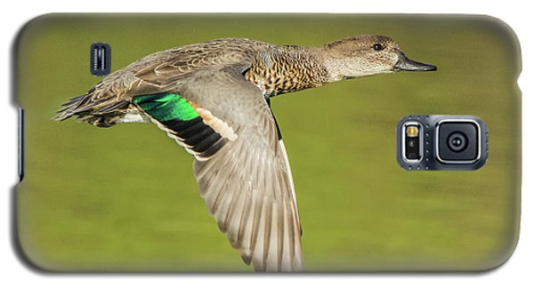 Green-winged Teal 6320-100217-2cr Galaxy S5 Case
