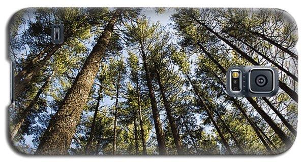 Greenbank Pines Galaxy S5 Case