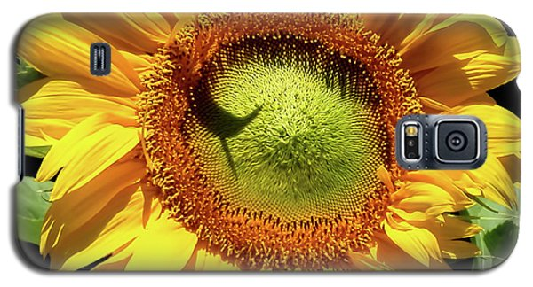 Galaxy S5 Case featuring the photograph Greenburst Sunflower by Rona Black