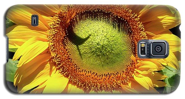 Greenburst Sunflower Galaxy S5 Case by Rona Black