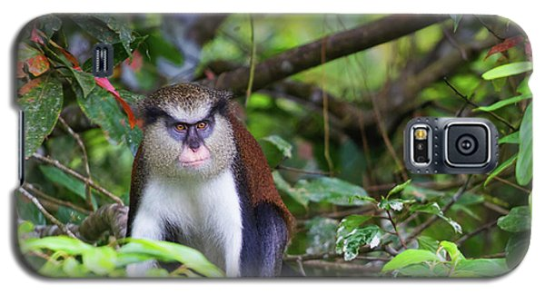 Grenada Monkey 2 Galaxy S5 Case