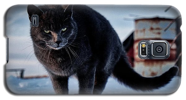Grey Cat, Grey Mood Galaxy S5 Case