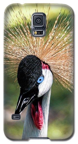Grey Crowned Crane Gulf Shores Al 2041 Galaxy S5 Case