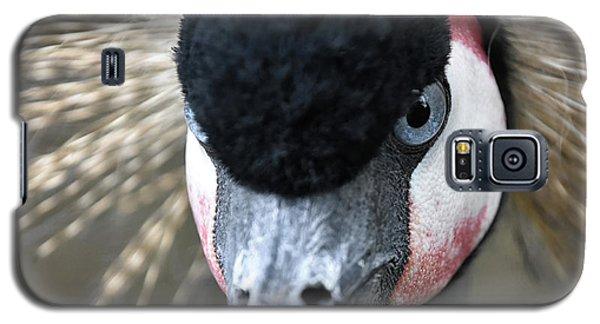 Grey Crowned Crane Galaxy S5 Case