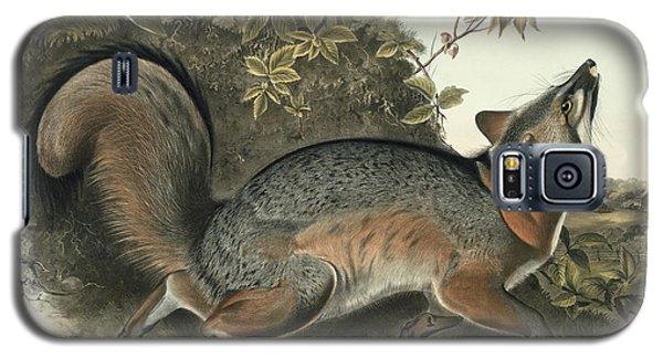 Audubon Galaxy S5 Case - Grey Fox by John James Audubon