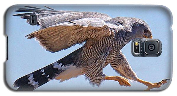 Grey Hawk Alights Galaxy S5 Case