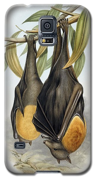 Grey Headed Flying Fox, Pteropus Poliocephalus Galaxy S5 Case by John Gould
