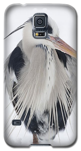 Grey Heron In The Snow Galaxy S5 Case