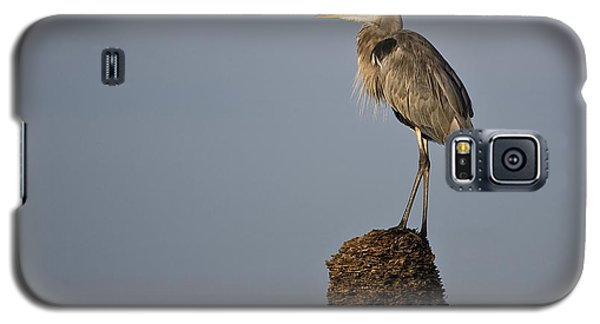 Grey Heron Galaxy S5 Case