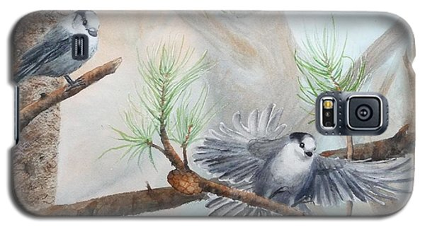 Grey Jays In A Jack Pine Galaxy S5 Case