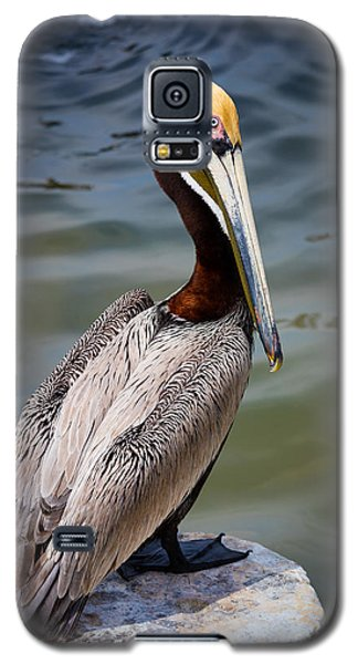 Grey Pelican Galaxy S5 Case by Inge Johnsson