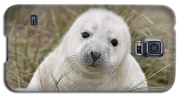Grey Seal Pup Galaxy S5 Case