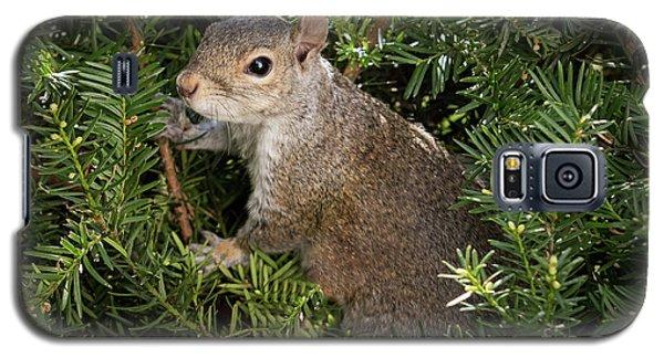 Grey Squirrel Galaxy S5 Case