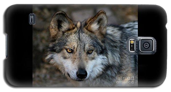 Grey Wolf Galaxy S5 Case