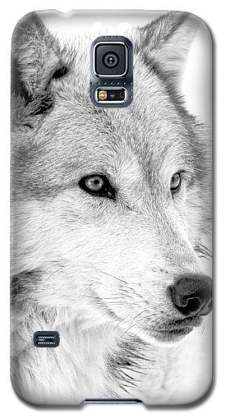Grey Wolf Profile Galaxy S5 Case by Athena Mckinzie