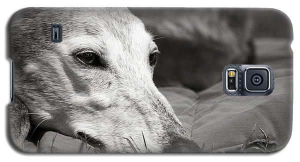 Galaxy S5 Case featuring the photograph Greyful by Angela Rath